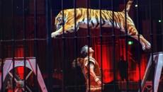 Общественники и бизнес критикуют «животную» инициативу Рады