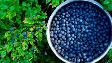 «Украинская ягода» экспортировала в Катар 5 тонн голубики и малины