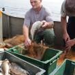 Промышленный вылов рыбы вырос на 12%