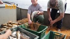 В Балтийском море ограничивают вылов рыбы