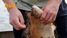 Кабмин увеличил штраф за незаконный вылов рыбы