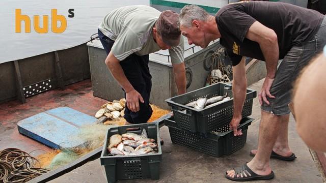 Производителей рыбы допустили до страхования