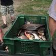 Украина нарастила экспорт рыбы
