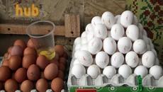 Стоимость куриных яиц рухнула на 30%