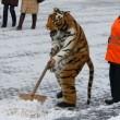 В Украине прогнозируют заморозки