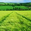 Арахамия рассказал, когда примут закон о рынке земли