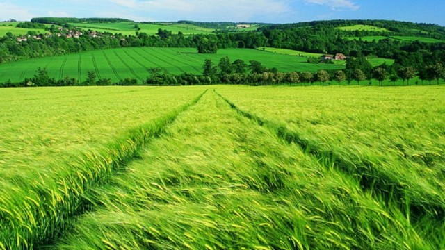 В Украине проведут оценку сельхозземель
