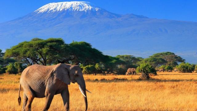 В Минэкономики узнали, какие украинские товары ждут в Кении и Танзании