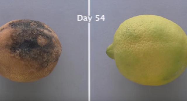 Компания Edipeel научилась «продлевать» жизнь фруктов и овощей