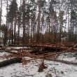 Порошенко не подписал закон, криминализирующий контрабанду леса