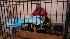Активисты у здания суда - не помеха назначить меру пресечения Насирову, – Журжий