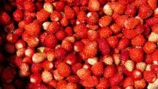 Доля Украины в производстве мягких ягод в Восточной Европе составляет 25%
