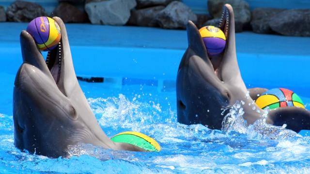У дельфинария «Немо» арестовали здания из-за нецелевого строительства