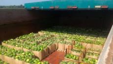 США понравилась перевозка «арбузов Гройсмана»