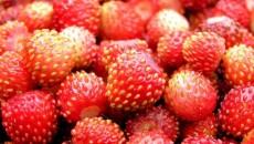 В Украине собрали 11 тыс. тонн ягод