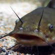 Стартап BlueNalu выращивает «рыбу» без костей