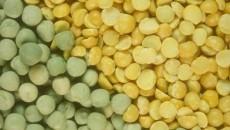 Украина становится ключевым мировым производителем бобовых