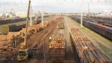 Битва за лес: почему Кабмин решил централизовать управление лесхозами