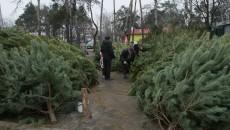 Гослесагенство предлагает украинцам проверять легальность елок