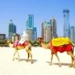 Безвиз с ОАЭ заработает в канун Нового года