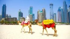 Украина нарастит экспорт продуктов в ОАЭ