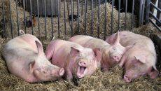 Требования к сельхозпостройкам максимально дебюрократизируют