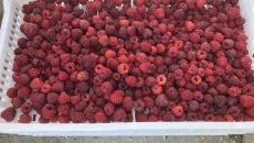 Украина заработала на экспорте малины и ежевики $1 млн