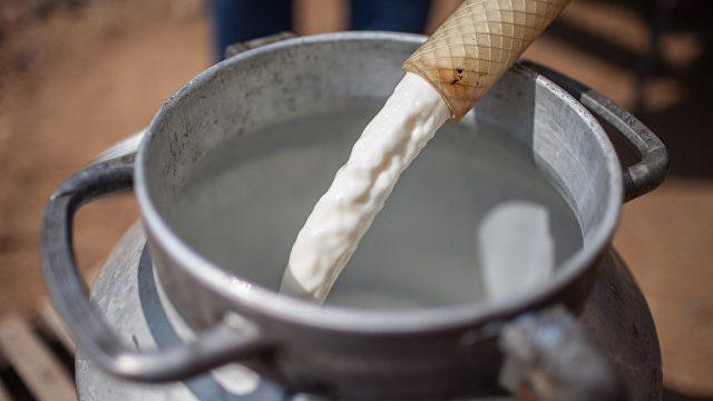 В Украине производство молока выросло на 4%