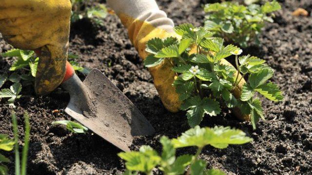Производителям ягод, винограда и хмеля тоже частично компенсируют расходы