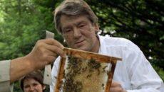 В Украине насчитали 400 тыс. пчеловодов