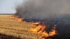 Штрафы за сжигание травы и стерни повысят до 20 тыс. грн