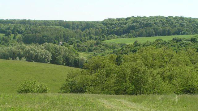 Под Киевом в Козине из госсобственности схемно вывели 13 га леса