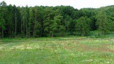 Под Киевом у частников отбили 6 га Беличанского леса стоимостью 40 млн грн