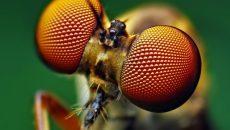 Стартап по производству сладостей из насекомых привлёк €200 тысяч