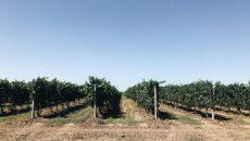 В Одессе горели виноградники французского бизнесмена