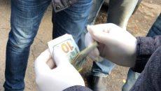 Под Киевом на крупной взятке задержали двух экологов: названы фамилии, - СМИ