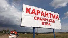 В Одесской области зафиксирован случай заболевания сибирской язвой