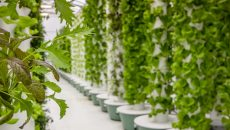 Стартап PS Nutraceuticals будет специализироваться на аэропонных фермах