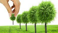 Озеленение при проектировании улиц и дорог может стать обязательным