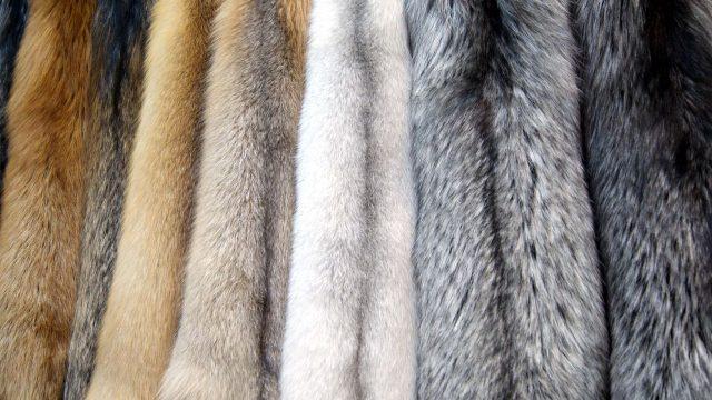 Депутаты предлагают запретить производство меха в Украине