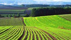 Открытие рынка земли может снизить мотивацию некоторых агрохолдингов помогать общинам — Виктория Нагирняк, МХП