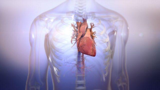 Стартап Biolife4D напечатал сердце