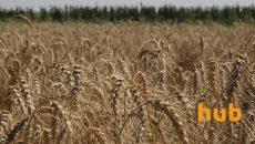 С начала сезона экспорт зерна превысил 26 млн тонн