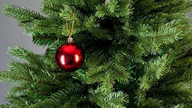 Киевляне сдали на утилизацию свыше 11 тысяч новогодних елок
