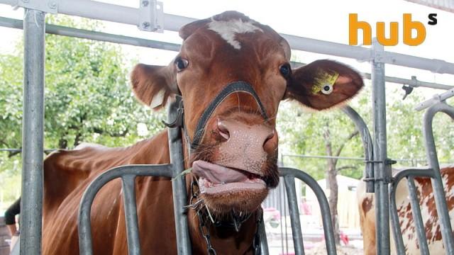 В Украине сократилось производство молока