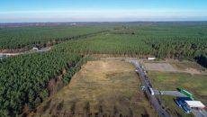 В Германии суд разрешил Tesla продолжить вырубку леса