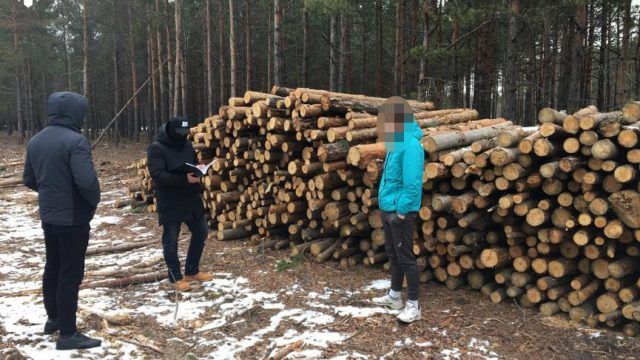 В Гослесагентстве и лесничествах Житомирской области проходят обыски