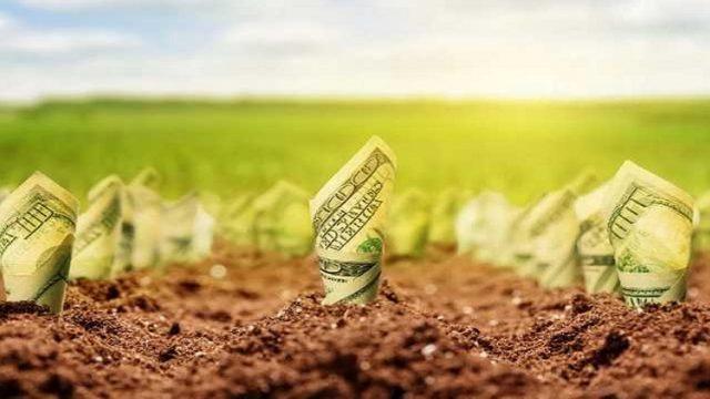 Рынок земли: в Раде заблокировали подписание закона