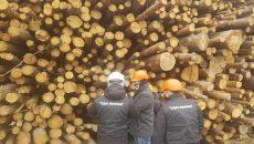 Под Киевом ТЭС сжигала радиоактивную древесину