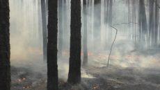 В Житомирской области горит 15 гектаров леса, - ГосЧС